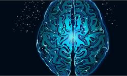 加剧痴呆风险!有害的身体脂肪不仅让你大腹便便,还会导致大脑灰质萎缩
