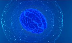 """研究发现:一种蛋白功能的缺失,可能是破坏脑脊液的重要""""开关"""""""