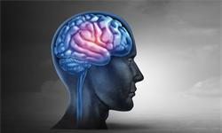 廣州中醫藥大學和暨南大學發現新的潛在癲癇治療靶標,成果登上《自然》子刊