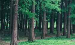 痛心!歐洲森林失去過半生物總量,更難抵擋蟲害侵擾