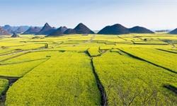 一<em>文</em>带你了解2020年中国休闲农业和乡村旅游行业市场现状、竞争格局及发展前景