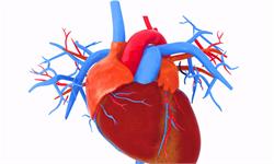 研究人员在心脏中发现了一个备用的自然起搏器
