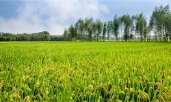 2020年中国<em>农业产业化</em><em>联合体</em>行业市场竞争格局分析 行业集中度较高