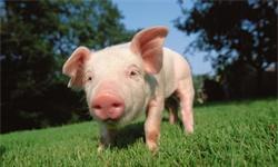 2020年中国生猪养殖行业市场现状及发展趋势分析 <em>期货</em>上市将提升市场抗风险能力
