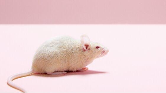 科学家用干细胞培育出会心跳的老鼠胚胎:还能长出肌肉和神经系统