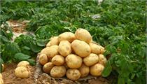 广州市黄埔区 广州开发区 广州高新区现代农业发展实施办法