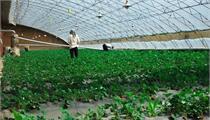 鱼台县:关于加快现代农业产业园区建设的指导意见