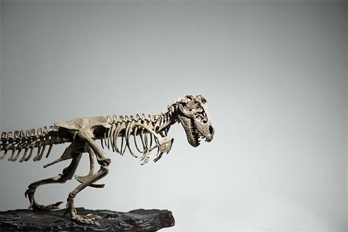 科学家发现3亿年前的微型恐龙化石:体长仅5厘米,身上有鳞片会挖穴而居