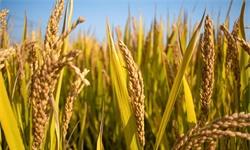 2020年河南省<em>农资</em><em>连锁</em>行业市场现状及发展趋势分析 粮食产量提升<em>农资</em>需求增大