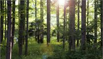 山西:关于大力发展林草第一产业的指导意见