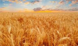 2020年河北省<em>农资</em><em>连锁</em>行业市场现状及发展趋势分析 粮食产量提升<em>农资</em>需求增大