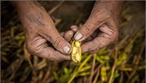 鹤壁市:淇滨区副区长周毅指导省级数字农业现代农业产业园项目