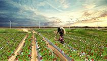 合肥市级现代农业产业园项目申报指南