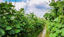 关于组织申报2020年宜兴市现代农业科技示范基地建设项目的通知