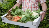 大英县:对标补短 精准发力 推动中药材现代农业园区高质量发展