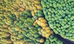 棕熊奇怪交配法则:摩擦树木越多,越能吸引母熊并产生更多后代