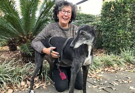 11岁狗狗患上淋巴癌原本命不久矣 但接种自身肿瘤制成的疫苗后又活蹦乱跳了
