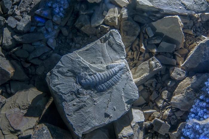 """昆明惊现""""古代动物幼儿园""""!多个5亿年前的全新物种幼体被发现"""