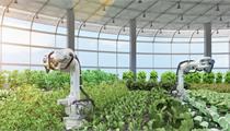福清市:关于加快特色现代农业发展的七条措施