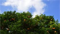 关于公开遴选2021年石门柑橘省级现代农业产业园实施主体的公告