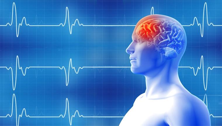 从啮齿动物到灵长类动物的突破!科学家实现迄今最高精度猕猴大脑三维高清成像