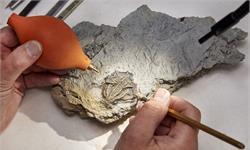 """英國發現""""侏羅紀龐貝城"""":數萬種海洋生物被定格在了1.67億年前"""