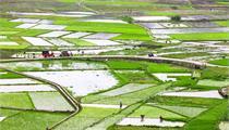 响水县:陈家港高水平建设现代农业示范区