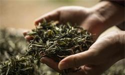 2021年中国<em>茶叶</em>行业市场供需现状分析 中国<em>茶叶</em>产量稳居全球首位
