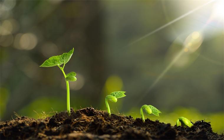 科学家正努力开发多种基于植物的疫苗,有效性和成本优势明显