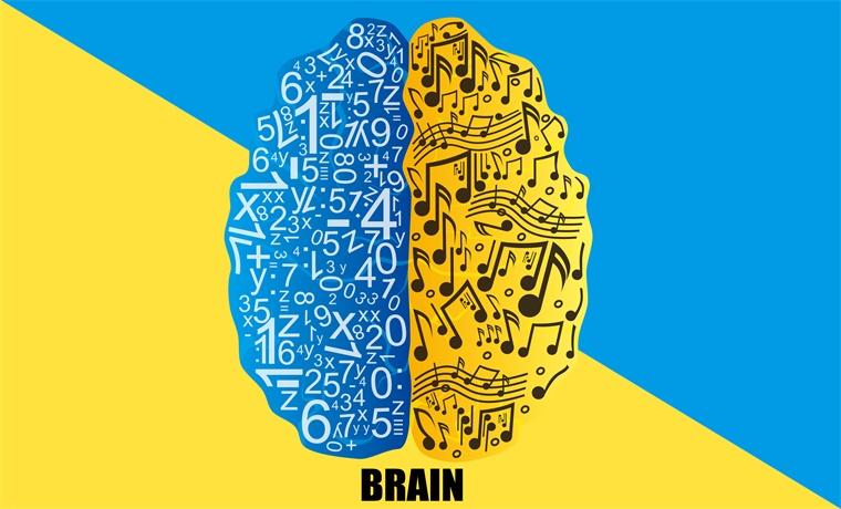 几十年坚信不移的理论可能大错特错!新研究表明大脑处理听觉和语言是并行的
