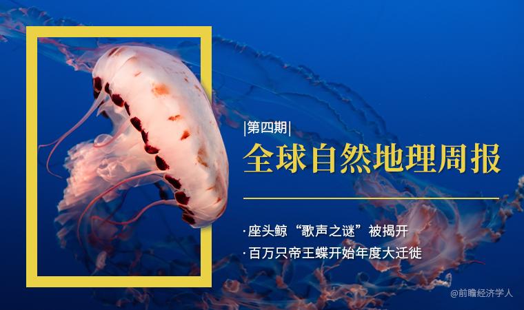 """前瞻全球自然地理周报第4期:座头鲸""""歌声之谜""""被揭开,百万只帝王蝶开始年度大迁徙"""