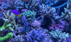 全球最完整珊瑚地图问世!由200万张高清卫星图像组成,涵盖范围前所未有