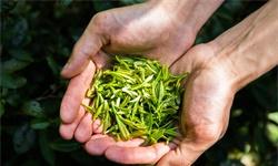 2021年中国<em>茶叶</em>行业出口现状及区域市场格局分析 <em>茶叶</em>出口量6年内首次下降