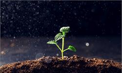 """協同""""合作""""!酵母和細菌共同生產植物激素,可更好地促進植物的生長"""