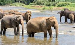 停止偷獵吧!研究稱偷獵對大象種群數量下降造成長遠影響