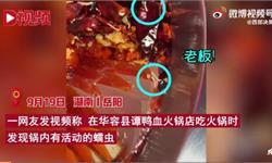 看吐了!譚鴨血火鍋被曝吃出白色蠕蟲 店方回應:疑為西紅柿果蟲