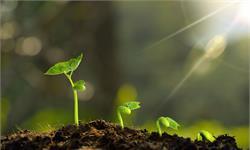 科学家开发新一代发光植物:充电10秒钟,发光1小时