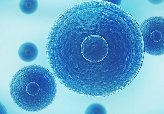 科学家从人类多能干细胞中构建类似胚胎的结构