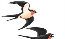 研究表明:鳥類在進行遷徙時,其腸道細菌會發生變化