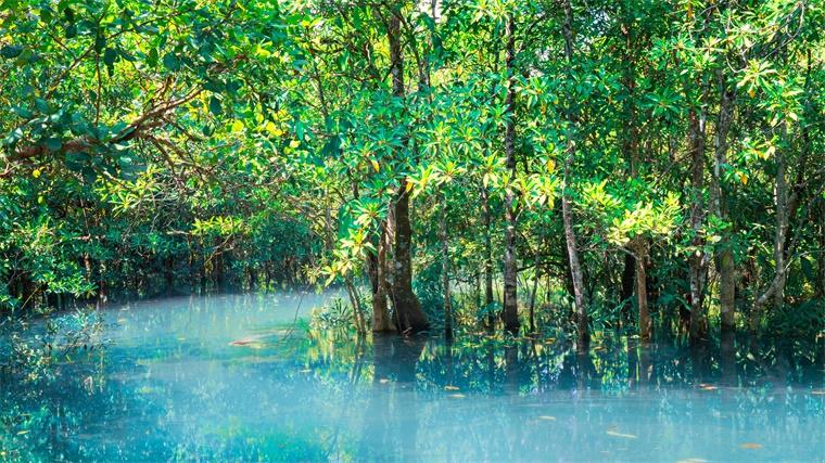 """一片""""被时间困住""""12.5万年的森林成失落的世界,科学家破解背后的谜团"""