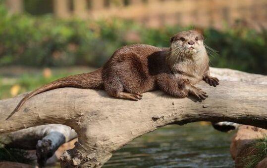 可爱!上海动物园一水獭帮游客捡手机获锦旗嘉奖 网友:加餐!