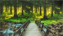 广东省:关于加快推进森林康养产业发展的意见