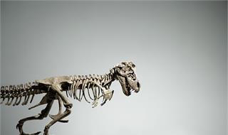 克隆恐龙或将成为现实?科学家在1.25亿年前恐龙细胞中发现健康DNA