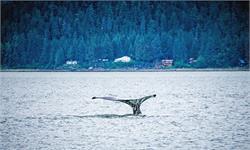 是什么吸引了200頭座頭鯨群體游到非洲海岸?