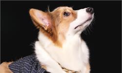 你的狗狗会经常歪头吗?可能是有天赋的表现!