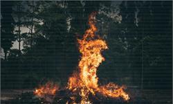 7500万年前,一场猛烈的野火席卷南极洲 无数植物被烧成灰烬