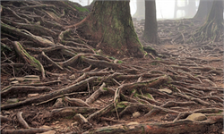 为什么树根不生长在阴凉处?